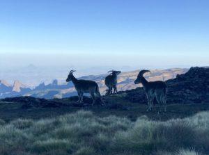 ETHIOPIE00019