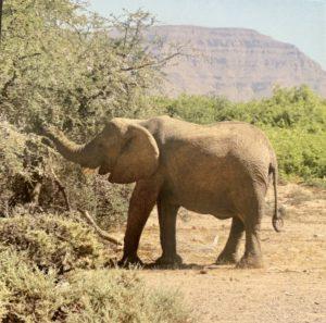 Namibie00009