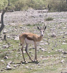 Namibie00012