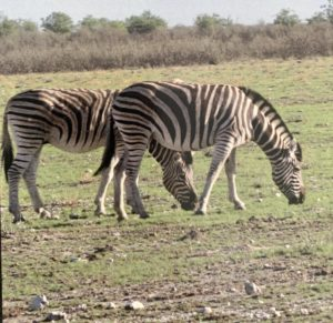 Namibie00014