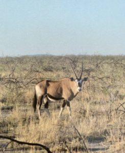 Namibie00030