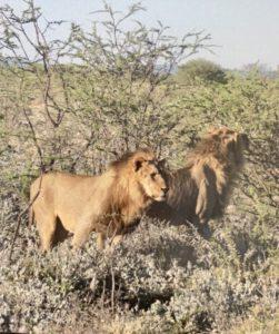 Namibie00031